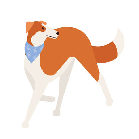 Sighthound or gazehound. Lovely cute hunting dog with short haired coat isolated on white background. Gorgeous purebred domestic animal or pet wearing neckerchief. Flat cartoon vector illustration Illustration