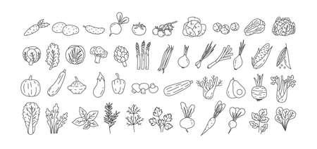 Paquet de légumes, racines cultivées, salades, herbes épicées dessinées avec des lignes de contour sur fond blanc. Ensemble d'éléments de conception naturels. Illustration vectorielle monochrome dans le style d'art en ligne.