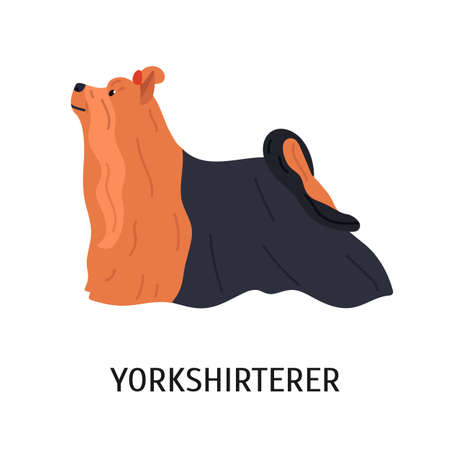 Yorkshire Terrier. Cute small lap dog isolated on white background. Adorable purebred domestic animal or pet of toy breed with long-haired coat. Colored vector illustration in flat cartoon style