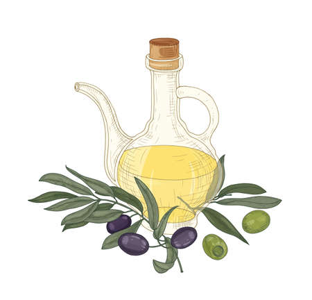 Elegant drawing of extra virgin oil in glass jug, olive tree branches with leaves, black and green fruits or drupes isolated on white background. Colorful realistic hand drawn vector illustration