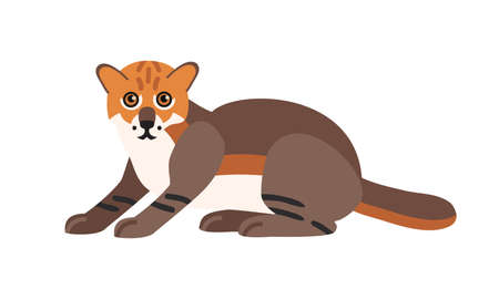 Flat-headed cat isolated on white background. Cute wild exotic carnivorous animal. Adorable wild Asian cat or felid. Endangered species of Asia. Colorful vector illustration in flat cartoon style