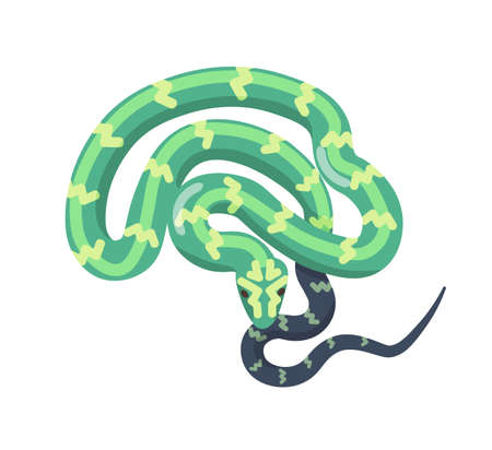 Green snake isolated on white background. Tropical legless reptile, venomous predator, wild carnivorous animal. Boa or python. Desert or jungle fauna. Vector illustration in flat cartoon style. Illustration