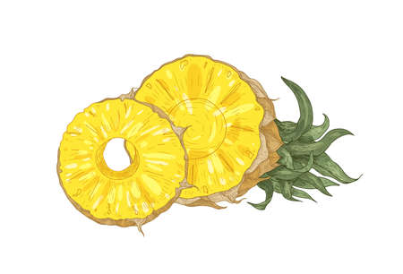 Detailed botanical drawing of cut fresh organic pineapple isolated on white background. Ripe delicious exotic tropical juicy sweet fruit. Realistic hand drawn vector illustration in antique style