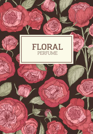 Floral flyer or poster template decorated by red English rose flowers on dark background. Botanical realistic vector illustration in vintage style for organic perfume or fragrance advertisement