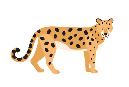 Jaguar isolated on white background. Stunning wild exotic carnivorous animal. Graceful large American wild cat or cute felid with spotted coat. Colorful vector illustration in flat cartoon style.