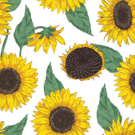 Botanical seamless pattern with sunflower heads. Floral backdrop with blooming flowers, leaves and stems hand drawn on white background. Realistic vector illustration for fabric print, wallpaper