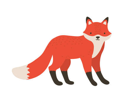 Funny furry little fox. Adorable lovely fluffy forest carnivorous animal isolated on white background. Cute amusing spring foxy. Bright colored childish vector illustration in flat cartoon style.