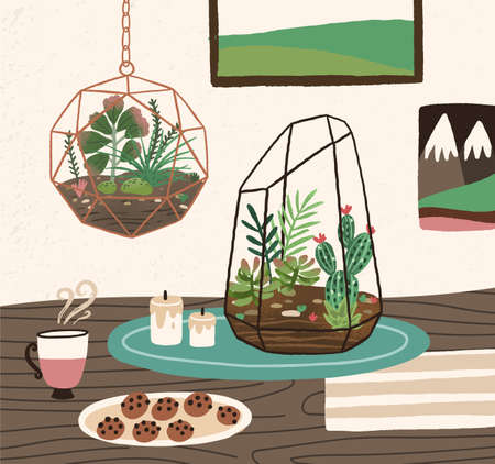 Interior of cozy room with succulents, cactuses and other desert plants growing in glass vivariums or florariums. Natural home decorations in trendy Scandic style. Colorful vector illustration. Illustration