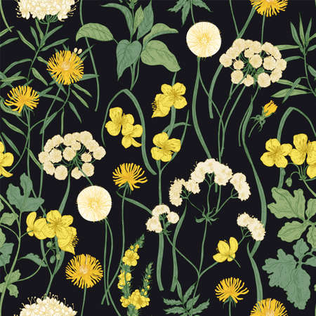 Romantic seamless pattern with blooming wild yellow flowers and perennial herbaceous plants on black background. Backdrop with lush vegetation of summer meadow. Vector illustration in vintage style