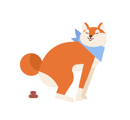 Funny Akita Inu pooping or defecating during walk. Cute dog of Japanese breed isolated on white background. Purebred domestic animal performing daily activity. Flat cartoon vector illustration.