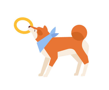 Adorable Akita Inu playing with toy. Playful funny purebred dog or doggy pulling rubber ring isolated on white background. Daily activity of domestic animal or pet. Flat cartoon vector illustration Ilustração