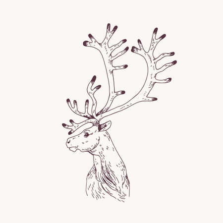 Outline portrait of male red deer, hart or stag. Head of graceful wild animal with antlers hand drawn on light background. Decorative design element. Monochrome vector illustration for logotype. Stock Illustratie