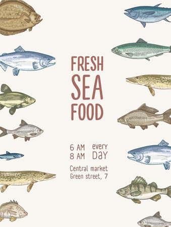 Modèle de flyer avec poisson ou fruits de mer frais et place pour le texte. Affiche avec des créatures sous-marines, des espèces aquatiques. Illustration vectorielle réaliste colorée élégante dans un style rétro pour la publicité sur le marché Vecteurs