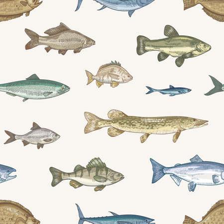 Elegante motivo senza cuciture con diversi tipi di pesce su sfondo chiaro. Sfondo con animali sottomarini o creature acquatiche che vivono in mare, oceano, lago. Illustrazione vettoriale in stile vintage