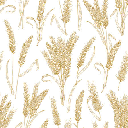 Natural seamless pattern with wheat ears on white background. Backdrop with cultivated cereal plant, grain or crop. Realistic vector illustration in retro style for wrapping paper, fabric print 矢量图像
