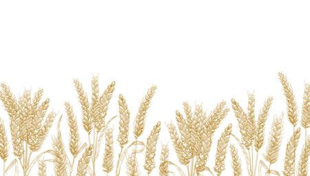 Poziome tło z kłosami pszenicy na dolnej krawędzi. Naturalne tło dekoracyjne z ekologicznymi uprawami roślin zbożowych, zbóż lub upraw. Realistyczna ilustracja wektorowa w eleganckim stylu vintage