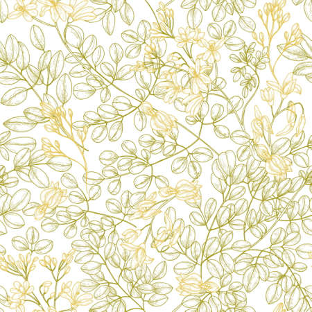 Botanical seamless pattern with Moringa oleifera leaves and flowers. Natural backdrop with medicinal plant or herb drawn with contour lines on white background. Elegant floral vector illustration