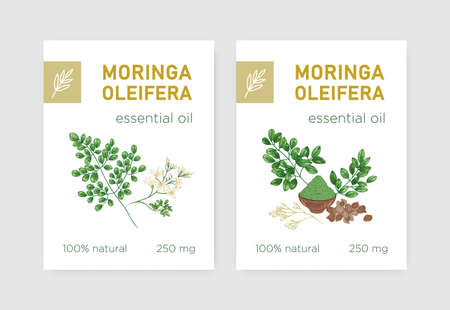 Bundle of labels with Miracle Tree or Moringa oleifera. Set of tags with edible herbaceous plant used in phytotherapy. Botanical vector illustration in realistic vintage style for natural product Imagens - 128183333