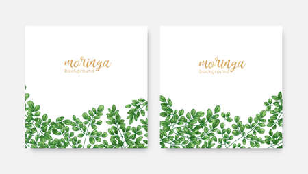 Bundle of elegant square backdrops or labels with green Miracle Tree or Moringa oleifera foliage. Set of natural background templates with exotic herbaceous plant. Realistic vector illustration Imagens - 128183387