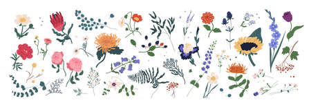 Collection of wild blooming meadow flowers isolated on white background. Bundle of wildflowers used in floristry. Set of decorative floral design elements. Flat colorful botanical vector illustration