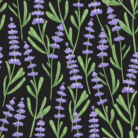 Natural seamless pattern with lavender flowers hand drawn on black background. Backdrop with flowering plant, blooming wildflower or fragrant herb used in aromatherapy. Realistic vector illustration