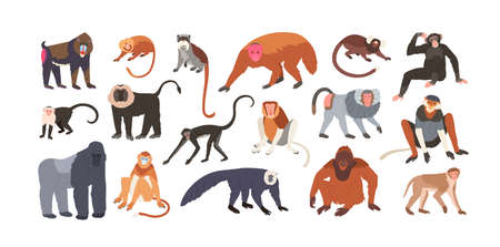 Collection of cute funny exotic monkeys and apes isolated on white background. Set of adorable tropical animals or primates. Bundle of endangered species. Flat cartoon colorful vector illustration
