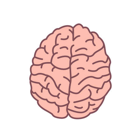 Human brain isolated on white background. Organ of nervous system. Symbol of intelligence, mindfulness, cognition, consciousness, wisdom. Decorative design element. Modern colored vector illustration  イラスト・ベクター素材