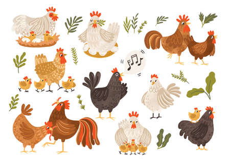 Collection of rooster, hen and chicks isolated on white background. Bundle of chicken with brood. Cute lovely family of domestic fowl or poultry birds. Childish flat cartoon vector illustration Ilustração