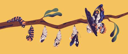 Etapas de desarrollo de la mariposa: larva de oruga, pupa, imago. Ciclo de vida, metamorfosis o proceso de transformación del hermoso insecto alado volador en la rama de un árbol. Ilustración de dibujos animados plana.