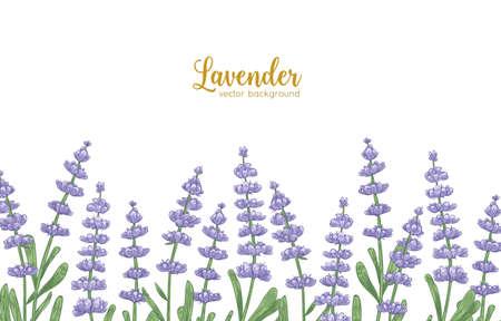 Eleganckie tło poziome ozdobione kwiatami lawendy i zielonymi liśćmi. Naturalne tło z pięknie kwitnącą rośliną lub aromatycznym zielem na dolnej krawędzi. Realistyczne ilustracja botaniczna. Ilustracje wektorowe