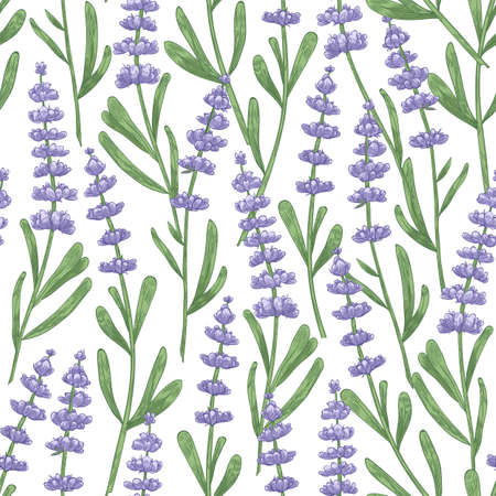 Botanical seamless pattern with lavender flowers hand drawn on white background. Backdrop with meadow flowering plant, blooming wildflower or aromatic herb. Elegant realistic vector illustration
