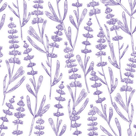Elegant seamless pattern with lavender flowers hand drawn on white background. Backdrop with meadow flowering plant, blooming wildflower used in aromatherapy. Monochrome botanical vector illustration