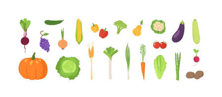Bundle of ripe fresh organic fruits and vegetables isolated on white background. Set of natural crops, wholesome vegetarian products, fresh healthy food. Flat cartoon colorful vector illustration Banco de Imagens - 128440005