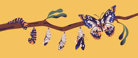 Schmetterlingslebenszyklus - Raupe, Larve, Puppe, Imago-Eklosion. Stadien der Metamorphose, des Wachstums und des Transformationsprozesses von geflügelten Insekten auf einem Ast. Bunte Vektorillustration der flachen Karikatur. Vektorgrafik