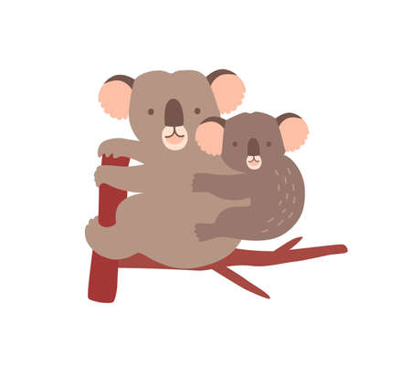 Koala with baby on tree branch isolated on white background. Family of wild Australian arboreal marsupial animals. Parent with youngling, mother with joey on back. Flat cartoon vector illustration.