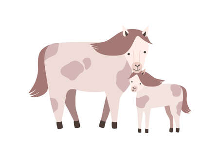 Horse and foal or colt isolated on white background. Family of wild or domestic herbivorous animals. Parent with youngling, mother and baby or offspring. Flat cartoon colorful vector illustration.
