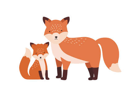 Fox with cub or pup isolated on white background. Family of funny wild carnivorous forest animals. Parent with youngling, mother and baby or offspring. Flat cartoon colorful vector illustration.