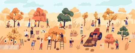 Des gens souriants ramassant des fruits dans un verger ou à la ferme. Mignons jeunes hommes et femmes heureux cueillant des pommes dans le jardin. Récolte d'automne, travaux agricoles saisonniers. Illustration vectorielle coloré de dessin animé plat. Vecteurs