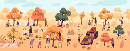 Smiling people gathering fruits in orchard or at farm. Cute happy young men and women picking apples in garden. Autumn harvest, seasonal agricultural work. Flat cartoon colorful vector illustration. Illustration