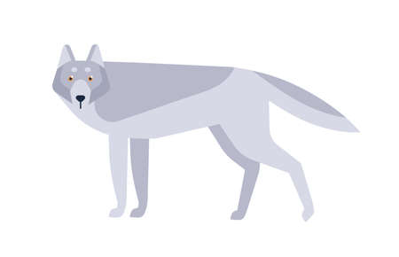 Wolf flat vector illustration. Scandinavian style wild animal isolated on white background. Grey canine mammal, wildlife predator minimalist drawing. Dangerous carnivore dwelling in forests. Banco de Imagens - 130219574