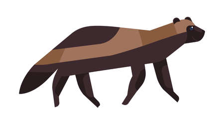Gulo gulo flat vector illustration. Minimalist wolverine drawing. Brown glutton, carcajou, skunk bear, quickhatch endangered species clipart. Wild animal, wolverene isolated on white background.