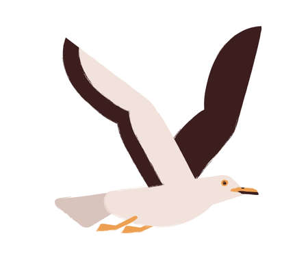 Flying gull with wings up flat vector illustration. Marine seagull. Wildlife fauna species. Cute winged creature. Wild animal. Bright colored seabird taking flight isolated on white background.