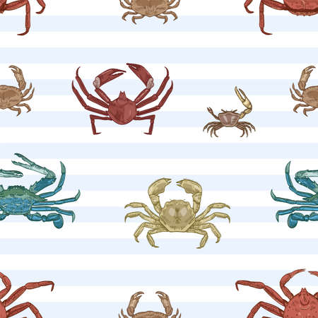 Sea crab vector seamless pattern. Aquatic animals, marine crayfish species on striped background. Restaurant seafood. Marine crustaceans with pincers wrapping paper, wallpaper textile design.