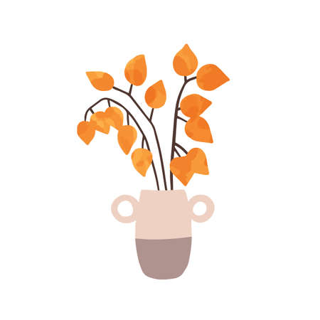 Physalis in vase hand drawn vector illustration. Ripe physalis peruviana isolated on white background. Decorative exotic plant, husk tomato, cape gooseberry. Gardening, horticulture symbol.