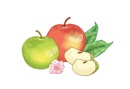Apple fruits composition hand drawn vector illustration. Whole red and green apples with flower and leaves drawing. Healthy nutrition, organic food, eco product realistic element isolated on white.