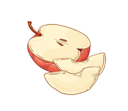 Apple fruit hand drawn vector illustration. Peeled apple pieces realistic design element isolated on white. Healthy nutrition, organic food, eco product. Fresh fruit detailed botanical drawing.