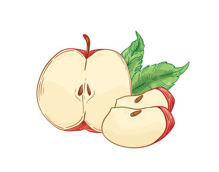 Red apple slices hand drawn vector illustration. Half cut and quarter fruit with leaves isolated on white background. Healthy dieting, eco product. Harvest season. Natural vitamin, sweet ingredient.