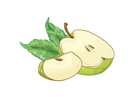 Green apple slices hand drawn vector illustration. Half cut and quarter summer fruit with leaves isolated on white background. Healthy nutrition, eco product. Harvest season. Natural vitamin.