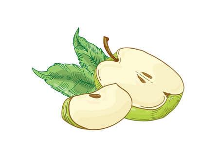Tranches de pomme verte illustration vectorielle dessinés à la main. Fruit d'été à moitié coupé et quart avec des feuilles isolées sur fond blanc. Alimentation saine, produit écologique. La saison des récoltes. Vitamine naturelle.