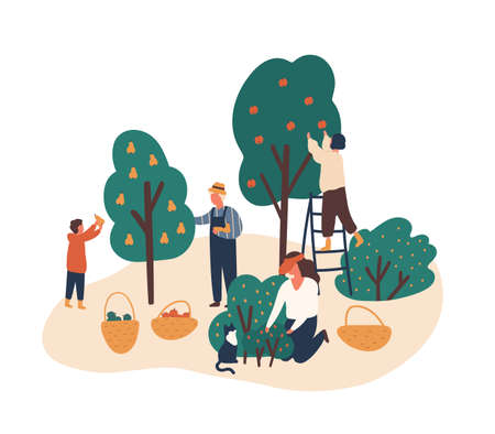Family working in fruit garden together flat vector illustration. People gathering apples, berries and pears. Grandfather, kids harvesting in backyard orchard characters isolated on white. Vettoriali